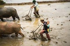 Y Ty,越南- 2017年5月12日:在水季节的露台的米领域,当农夫工作在领域 人运载他的小儿子 图库摄影