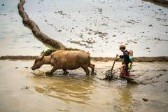 Y Ty,越南- 2017年5月12日:在水季节的露台的米领域,当农夫工作在领域 人运载他的小儿子 免版税库存照片