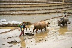 Y Ty,越南- 2017年5月12日:在水季节的露台的米领域,当农夫工作在领域 人运载他的小儿子 库存照片