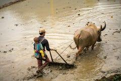 Y Ty,越南- 2017年5月12日:在水季节的露台的米领域,当农夫工作在领域 人运载他的小儿子 免版税图库摄影