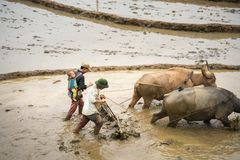 Y Ty,越南- 2017年5月12日:在水季节的露台的米领域,当农夫工作在领域 人运载他的小儿子 免版税库存图片