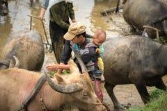 Y Ty,越南- 2017年5月12日:工作在领域的农夫 人运载他的后面的小儿子,在Y Ty,老街省, Vietna 免版税库存图片