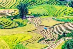 Y TY, LAOCAI, ВЬЕТНАМ - 6-ое сентября 2014 - славный взгляд полей риса террасных на времени сбора Стоковая Фотография