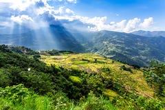 Y TY, LAOCAI, ВЬЕТНАМ - 6-ое сентября 2014 - славный взгляд полей риса террасных на времени сбора Стоковые Изображения
