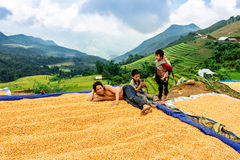Y TY, LAOCAI, VIETNAM - SEPTEMBER 6, 2014 - Ethnic people feeling happy with their corn harvest. Stock Photos