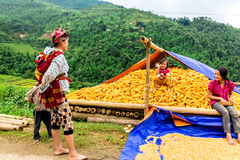 Y TY, LAOCAI, VIETNAM - SEPTEMBER 6, 2014 - Ethnic people are happy with their corn harvest Stock Photos