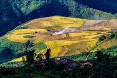 Y TY, LAOCAI, VIETNAM - SEPTEMBER 6, 2014 - Gouden rijst terrasvormige gebieden bij het oogsten van tijd Royalty-vrije Stock Foto