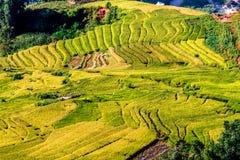 Y TY, LAOCAI, VIETNAM - SEPTEMBER 6, 2014 - Gouden rijst terrasvormige gebieden bij het oogsten van tijd Royalty-vrije Stock Fotografie