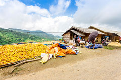 Y TY, LAOCAI, VIETNAM - SEPTEMBER 7, 2014 - An unidentified man drying corns on a shiny day. stock photos