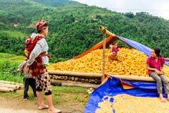 Y TY, LAOCAI, VIETNAM - 6 septembre 2014 - les personnes ethniques sont heureux avec leur récolte de maïs Photos stock