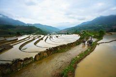 Y Ty, Vietnam - 12 de mayo de 2017: Campo colgante del arroz en la estación del agua, con los granjeros trabajando en el campo en foto de archivo
