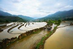 Y Ty, Vietnam - 12 maggio 2017: Giacimento a terrazze del riso nella stagione dell'acqua, con gli agricoltori che lavorano al cam Fotografie Stock