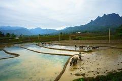 Y Ty, Vietnam - 12 maggio 2017: Giacimento a terrazze del riso nella stagione dell'acqua, con gli agricoltori che lavorano al cam Immagini Stock