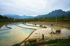 Y Ty, Vietnam - 12 maggio 2017: Giacimento a terrazze del riso nella stagione dell'acqua, con gli agricoltori che lavorano al cam Immagini Stock Libere da Diritti