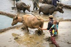 Y Ty Wietnam, Maj, - 12, 2017: Tarasowaty ryżu pole w wodnym sezonie z rolnikami pracuje na polu, Mężczyzna niesie jego małego sy Zdjęcia Royalty Free