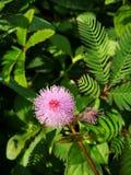 Ya del flor Imagen de archivo