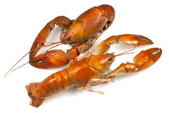 Yabby or Freshwater Lobster Stock Photos