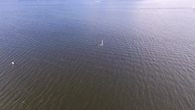 Yacht video d archivio
