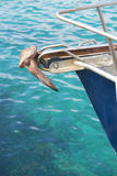Yacht bow with anchor and turquoise ocean water. Bow of yacht or fishing boat with rusty anchor and turquoise ocean water, copy space Royalty Free Stock Photography