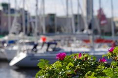 Yacht club. Yacht nature flowers water sun summer Royalty Free Stock Photo
