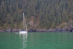 Yacht and forested coast Royalty Free Stock Photography