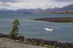 Yacht in Lake Tekapo with lupines blossom on the shore, New Zealand Stock Photography