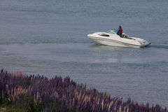 Yacht in Lake Tekapo with lupines blossom on the shore, New Zealand Stock Photos