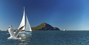 Yacht-Segeln, Seemöwen-Fliegen, blauer Himmel Lizenzfreies Stockbild