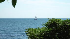 The yacht is under sail floats in the sea. View from the shore. Of behind the trees. On the horizon you can see the ships stock video