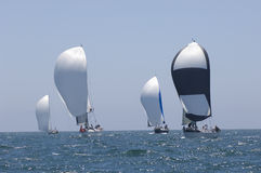 Yachten konkurrieren in Team Sailing Event Stockbild