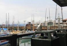 Yachten und andere Segelboote machten fest stockfoto