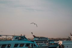 Yachter som anslutas i hamnstaden på solnedgången royaltyfria bilder