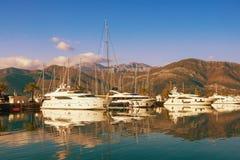 Yachtjachthafen in Adria Montenegro, Bucht von Kotor, Tivat-Stadt E stockfoto