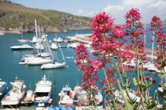 Yachtklubba med blomman Arkivfoto