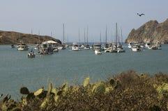 Yachts amarrés chez Catalina Harbor Images libres de droits