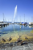Yachts ancrés avec des canards sur le premier plan, Genève, Suisse Photos libres de droits