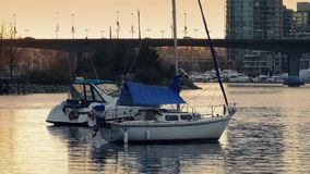 Yachts In City Bay In The Evening stock video footage