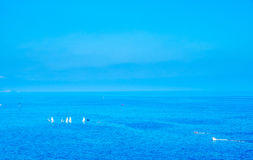 Yachts de navigation en mer au Monaco Photo stock