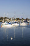 Yachts in Harbour. Three Yachts together in harbour at Lymington UK Stock Photo