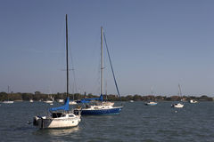 Yachts on the harbour of sarasota bay Royalty Free Stock Image