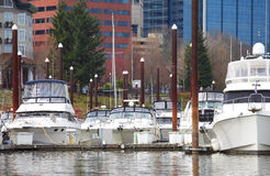 Yachts in a marina. Stock Images