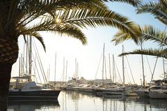 Yachts at Marina Royalty Free Stock Photo