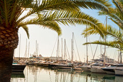 Yachts at Marina Royalty Free Stock Photography