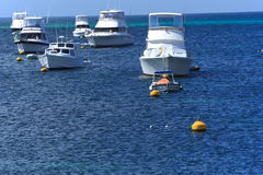 Yachts Marina,Western Australia Royalty Free Stock Photos