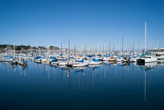 Yachts in Monterey Harbour Royalty Free Stock Photos