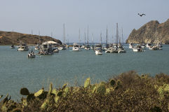 Yachts Moored at Catalina Harbor Royalty Free Stock Images