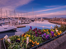 Yachts moored at the marina  at the sunset Stock Image
