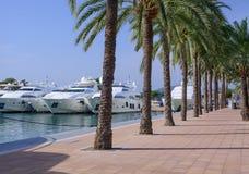 Yachts and palm trees. PUERTO PORTALS, MAJORCA, SPAIN - OCTOBER 27, 2013: Luxury yachts and palm trees on October 27, 2013 in Puerto Portals, Majorca, Spain Royalty Free Stock Photo
