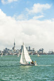 Yachts racing in auckland harbour Stock Photo