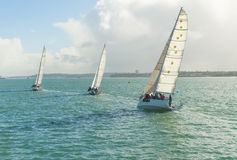 Yachts racing in auckland harbour Stock Photos
